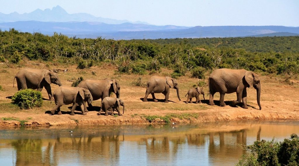 Elephants walking near a creek